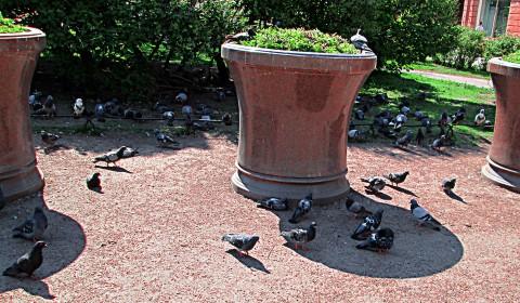 Пазл с тусой голубей