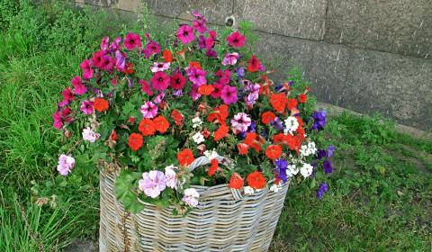 Пазл с цветами
