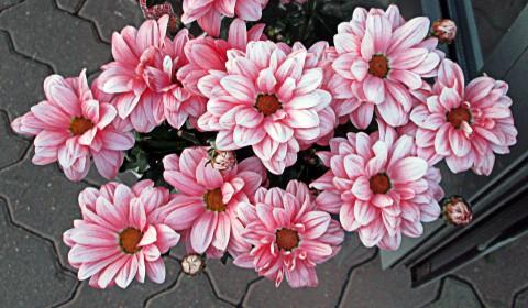 Пазл с розовыми цветами